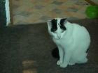 Mr. Sina, the cat.