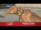 RSPCA Advert - Biggest Animal Rescue 2012