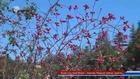 Kuşburnu Dağ Bitkisi - Kasnak Meşesei Sahası Isparta